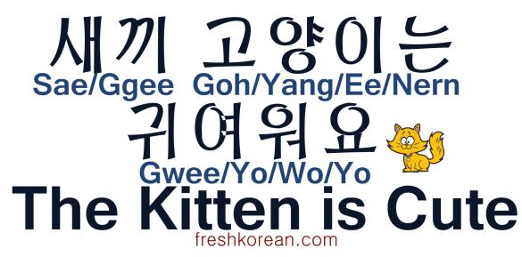 The Kitten is Cute - Fresh Korean