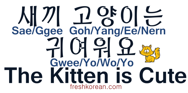 The Kitten is Cute - Fresh Korean
