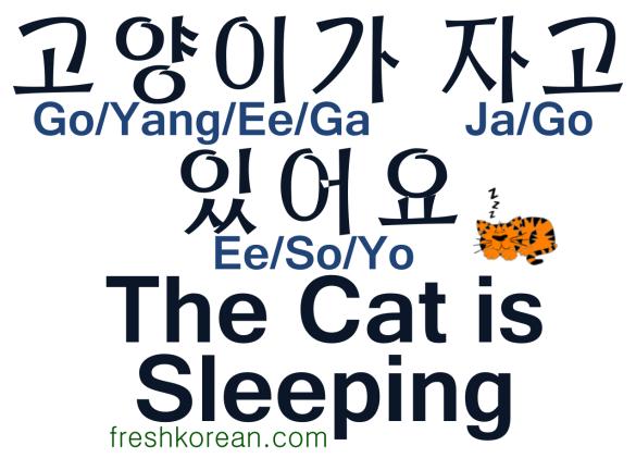 The Cat is Sleeping - Fresh Korean