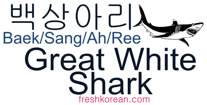 Great White Shark - Fresh Korean Phrase Card