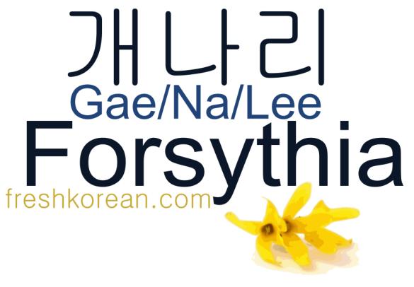 Forsythia - Fresh Korean Phrase Card