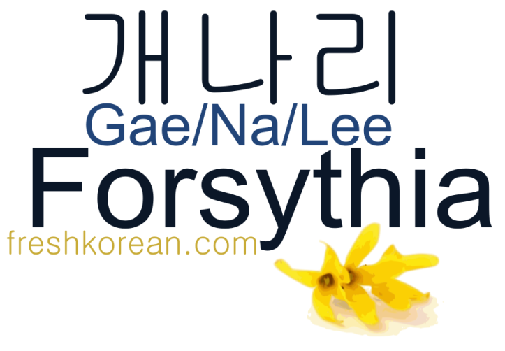 Forsythia - Fresh Korean Phrase Card