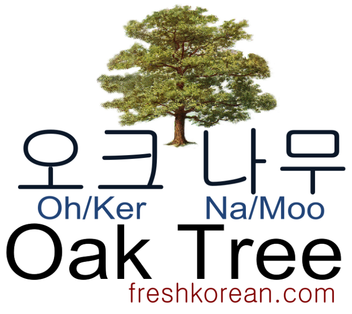 oak-tree-fresh-korean-phrase